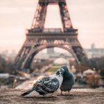 Není romantičtější dovolené než v Paříži